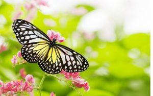 nice-butterfly-hd-best-wallpaper-beautiful-wallpapers-of-butterflies-1553006864